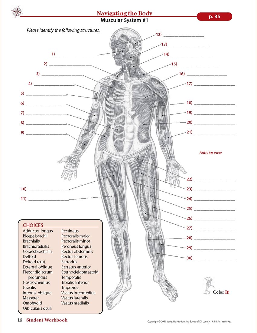Trail Guide To The Body Student Workbook 5th Edition Books Of