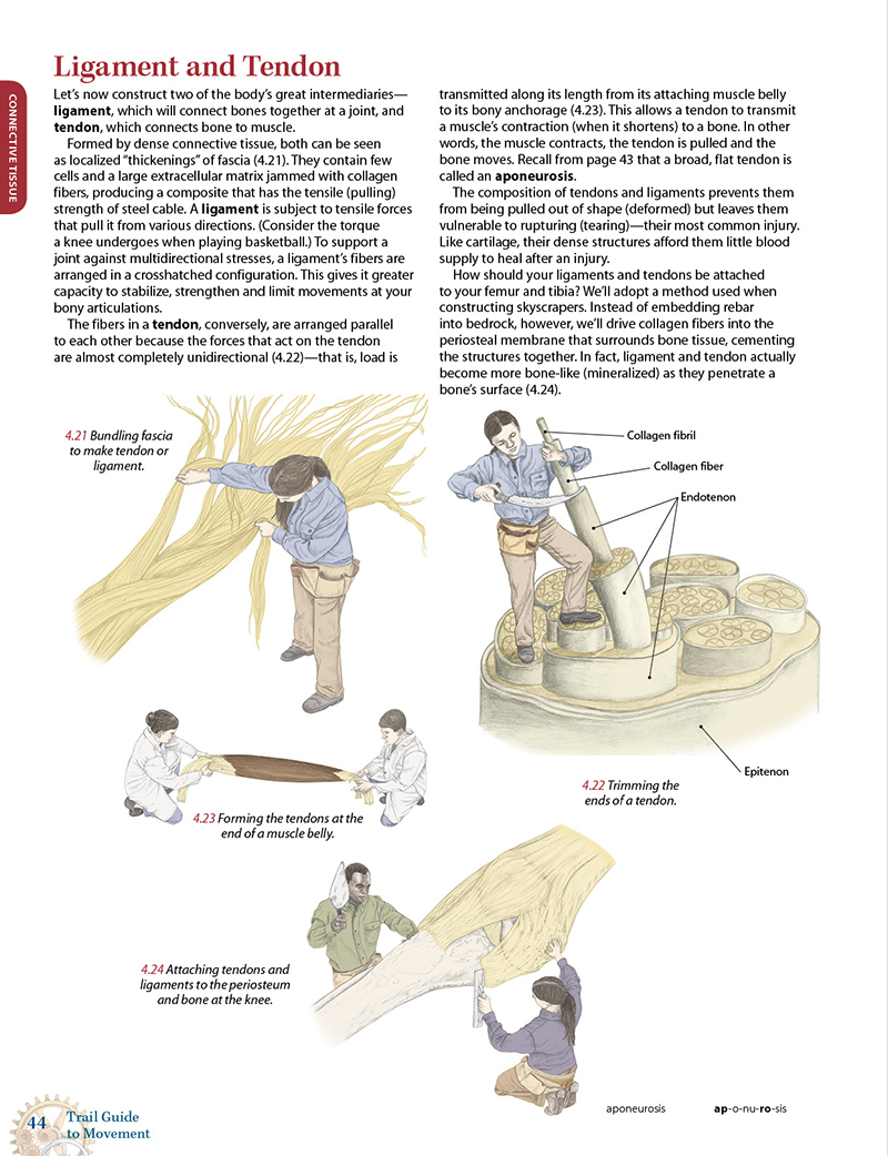 Trail Guide To Movement Ebook Books Of Discovery